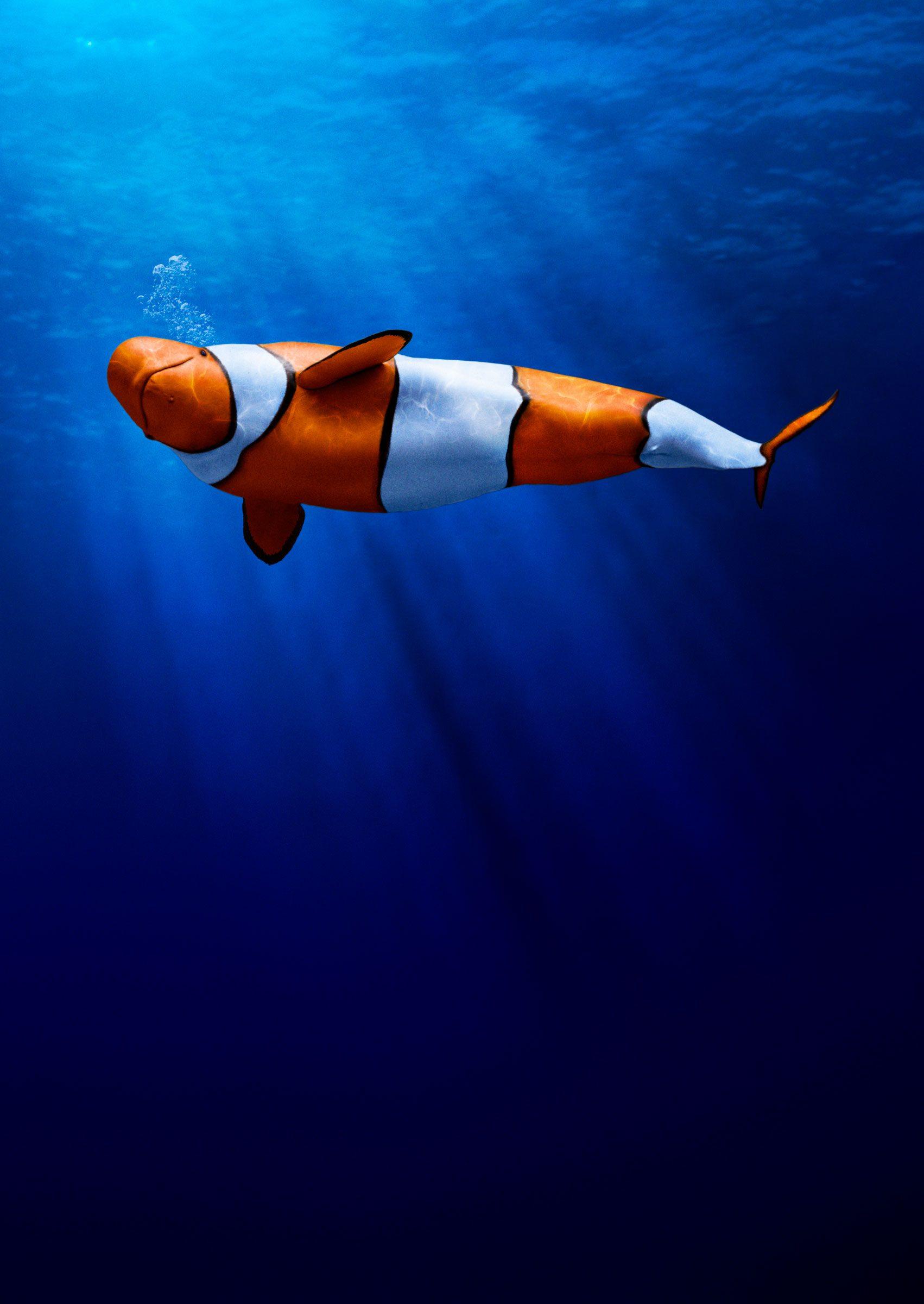 Life Aquatic 01